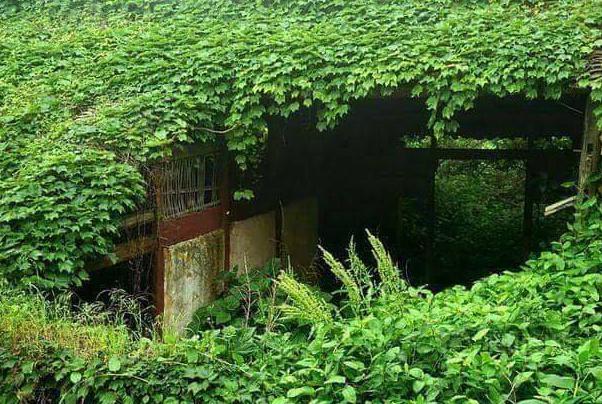 النباتات تستوطن القرية