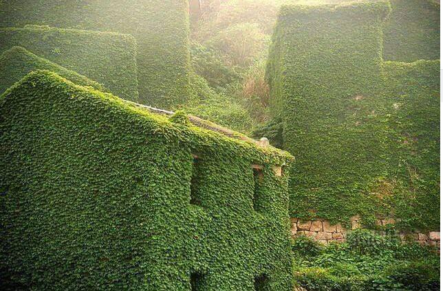 قرية فى الصين