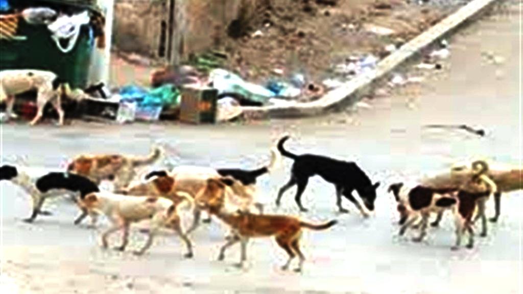 1- جانب من الكلاب الضالة-