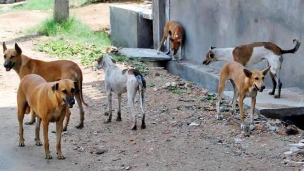 2- الكلاب الضالة فى القرى