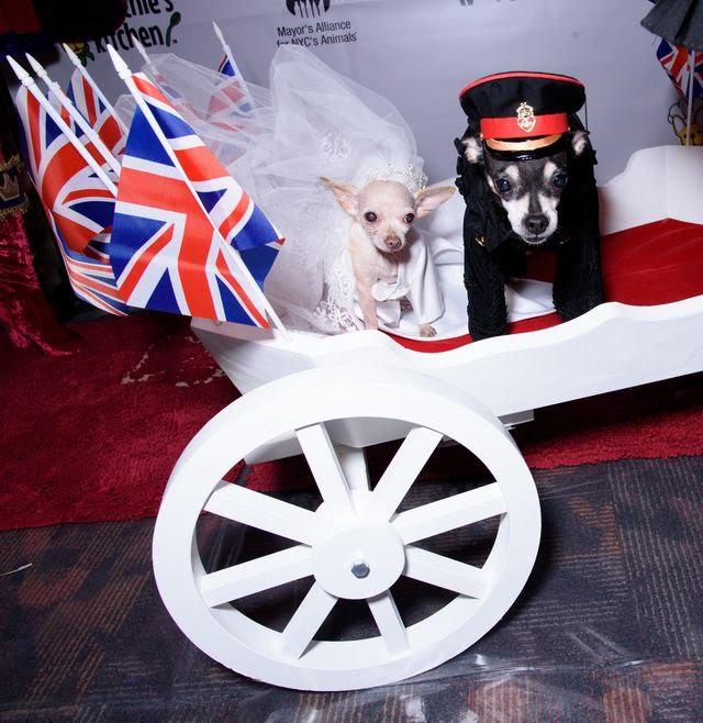 الكلاب بملابس الأمير هارى وميجان ماركيل