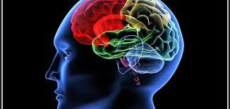 تحسن وظيفة الدماغ
