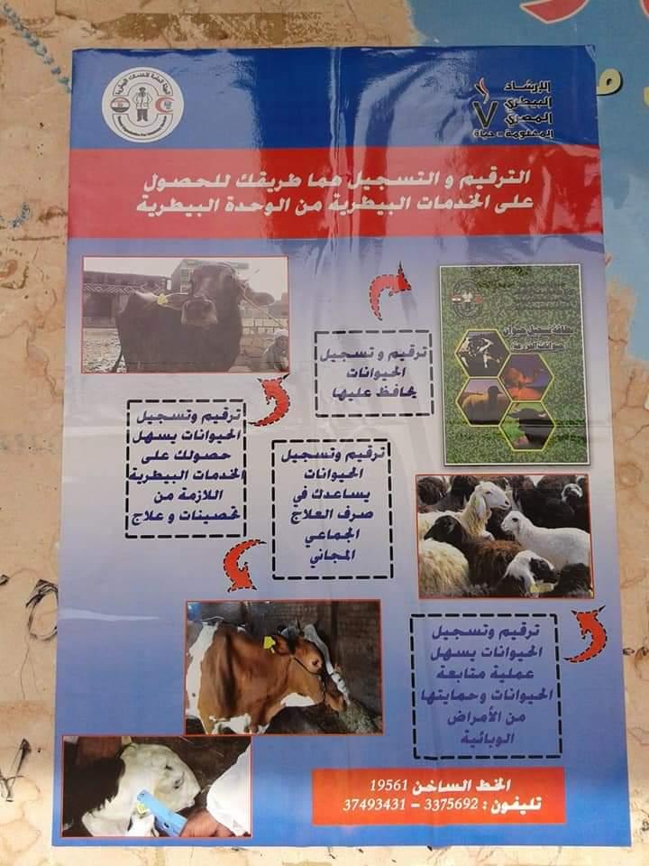 تحصين الماشية  ضد مرض الحمى القلاعية  (4)