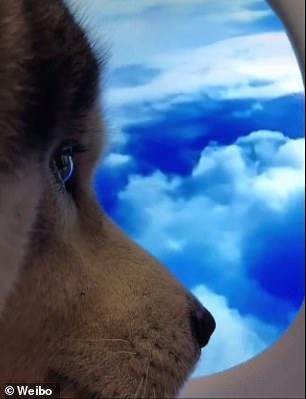 صورة كلب فى تحدى شباك الطائرة