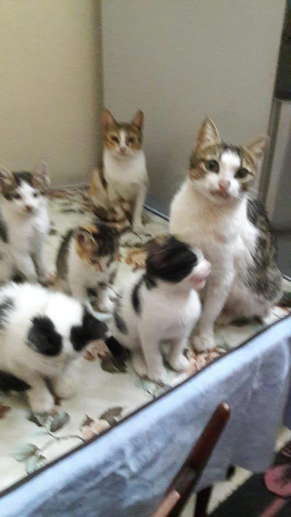 القطط في منزل امل