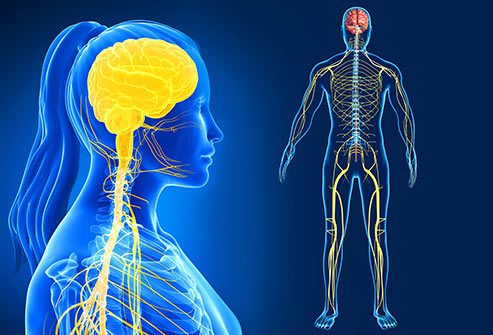 الدماغ يقوم بتصفية المعلومات غير الضرورية