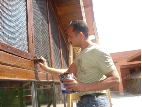 أعمال الترميم داخل المتحف المصرى بالتحرير (7)
