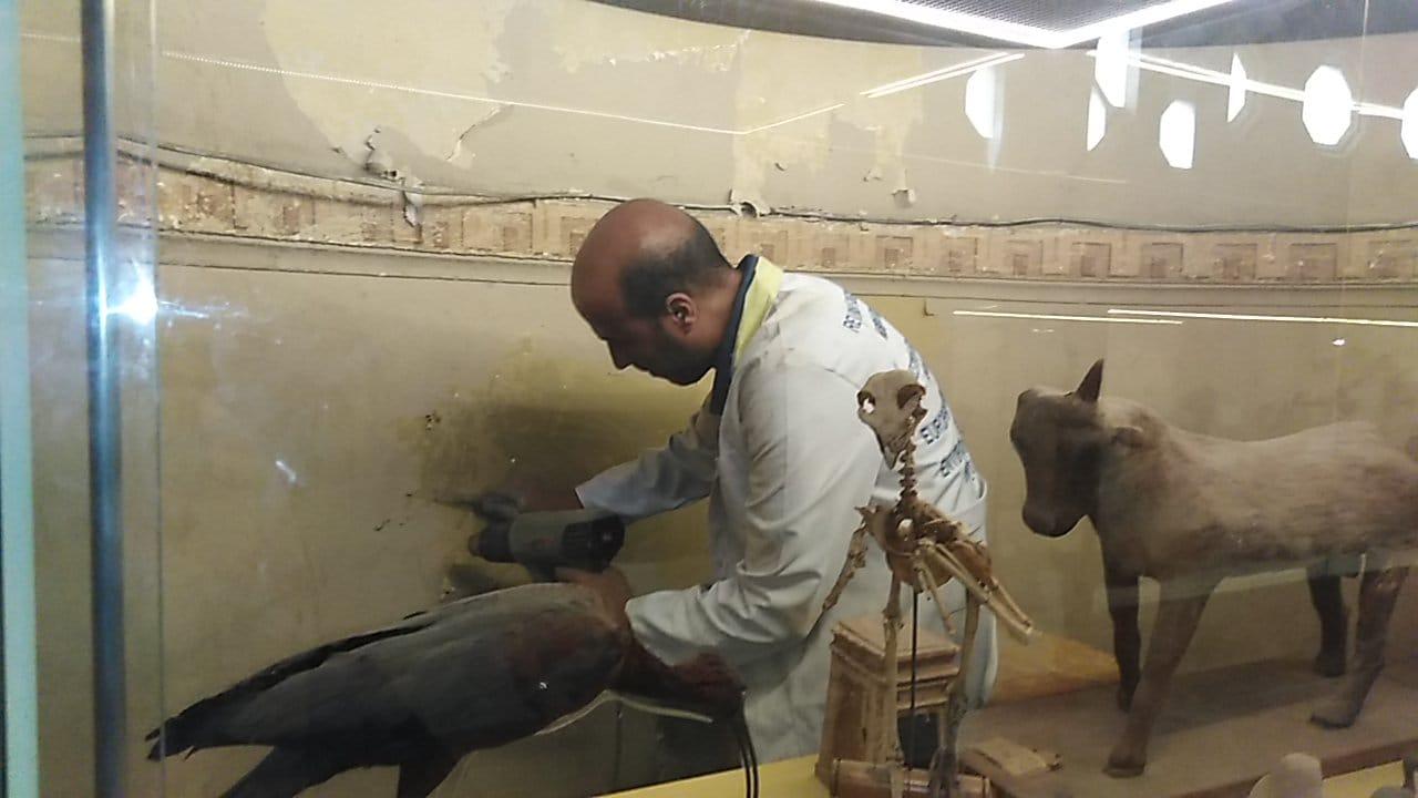 أعمال الترميم داخل المتحف المصرى بالتحرير (1)