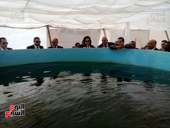 وزيرة التخطيط تتفقد مشروع الاستزراع السمكى بالوادى الجديد (4)