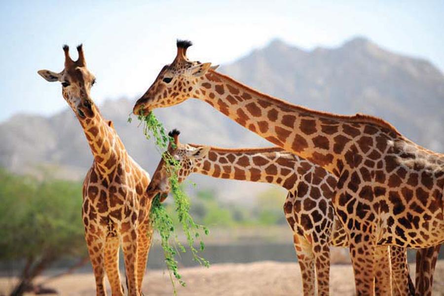 حديقة-حيوانات-اسطنبول