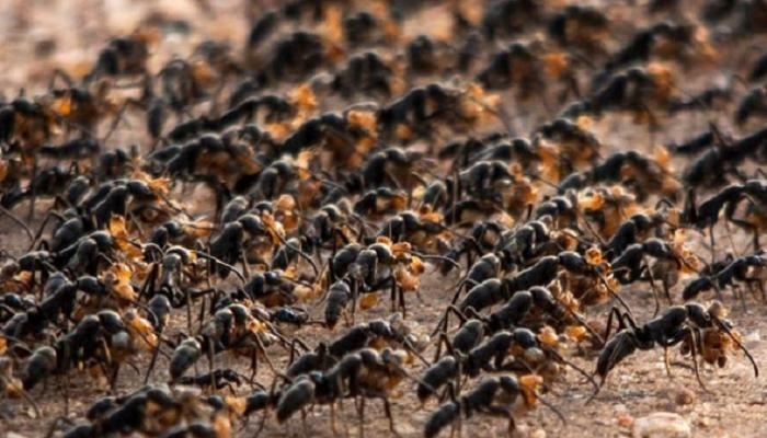127-163505-paramedic-ants-treating-injured_700x400