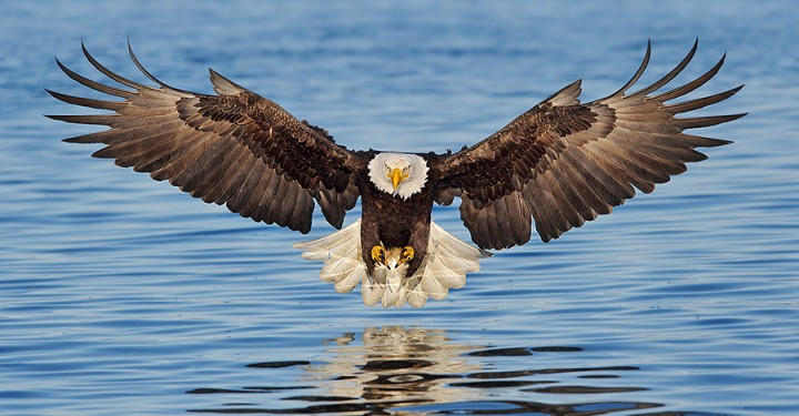 Alaska_Eagles_DS7_8992A-720x375