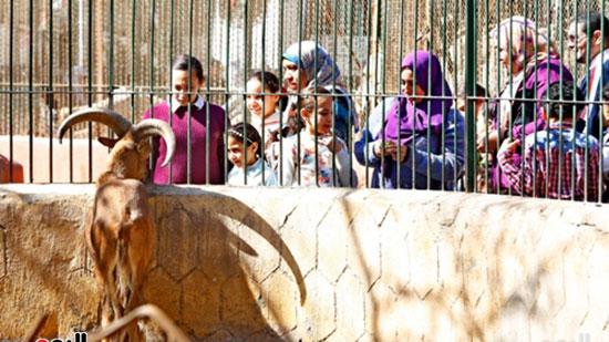 الأسر تودع الإجازة وتستعد للدراسة.. إقبال كثيف على حديقة الحيوان (17)