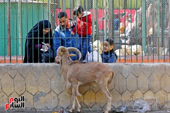 الأسر تودع الإجازة وتستعد للدراسة.. إقبال كثيف على حديقة الحيوان (18)