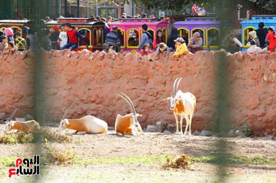 الأسر تودع الإجازة وتستعد للدراسة.. إقبال كثيف على حديقة الحيوان (34)