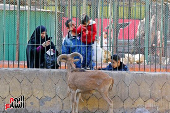 حديقة الحيوان (25)