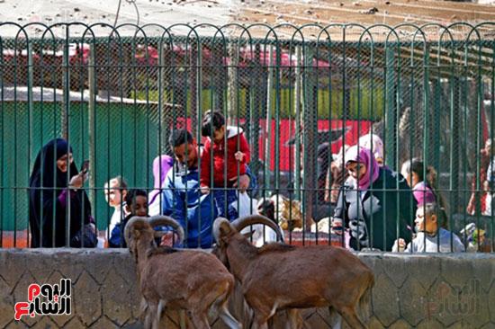 حديقة الحيوان (27)