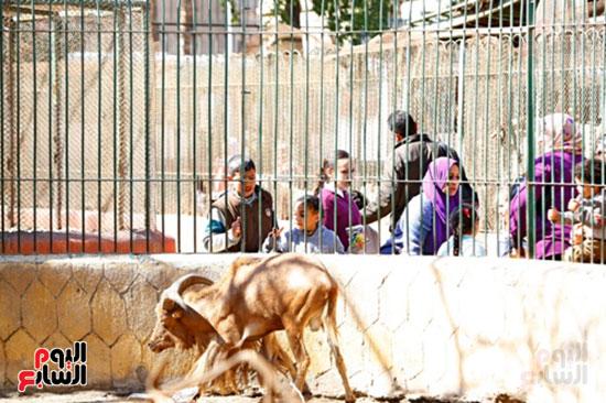 حديقة الحيوان (26)