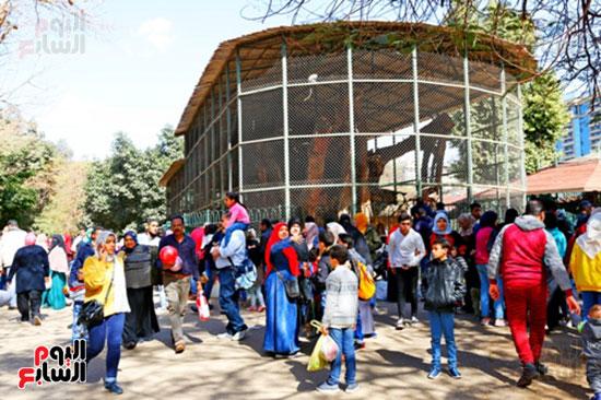 الأسر تودع الإجازة وتستعد للدراسة.. إقبال كثيف على حديقة الحيوان (4)