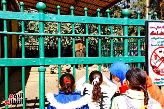الأسر تودع الإجازة وتستعد للدراسة.. إقبال كثيف على حديقة الحيوان (9)