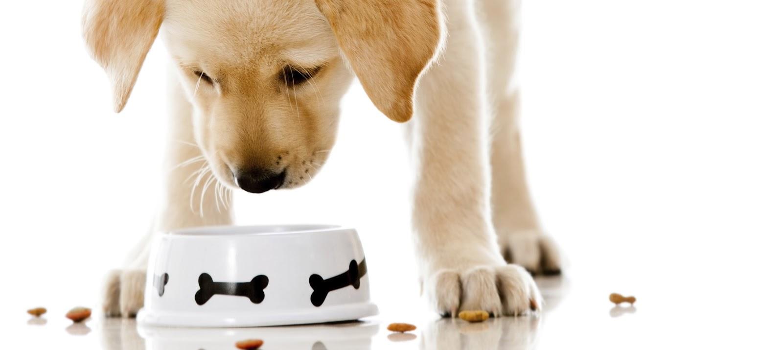 رجيم الكلاب (1)