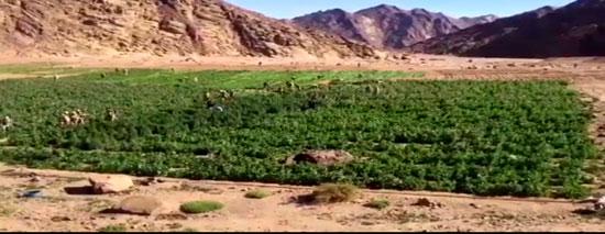 العملية الشاملة سيناء  (18)