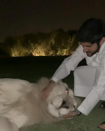 حمدان بن محمد يلهو مع أسد