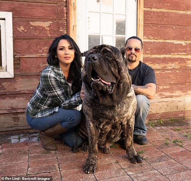 كلب ضخم (6)