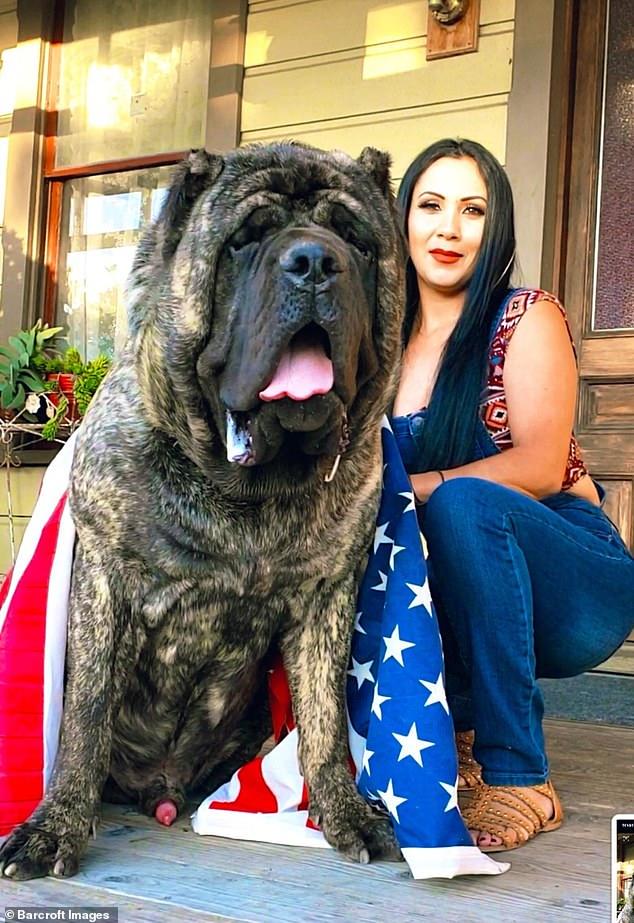 كلب ضخم 11