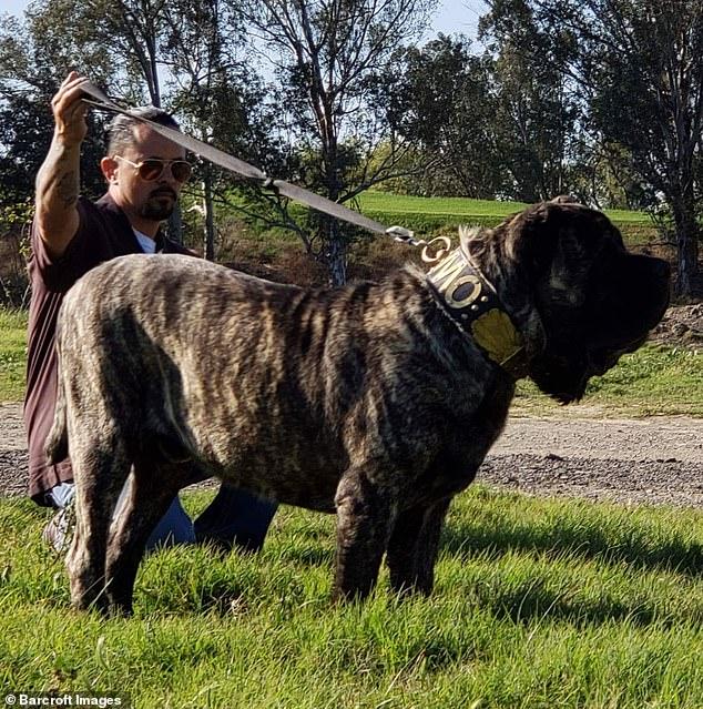 كلب ضخم (3)