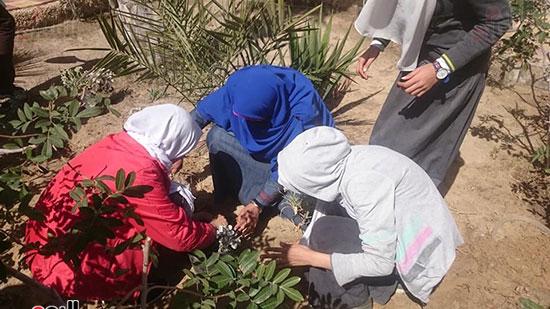 مدارس شمال سيناء (5)