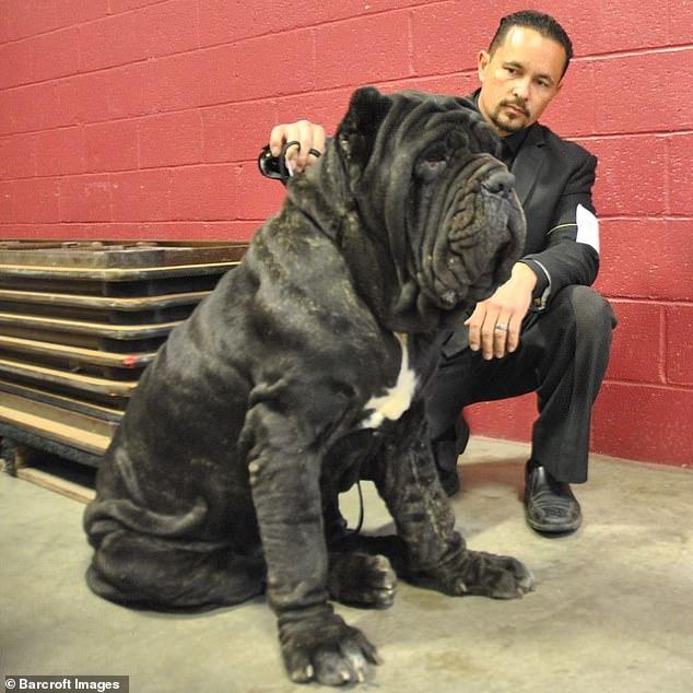 كلب ضخم (4)