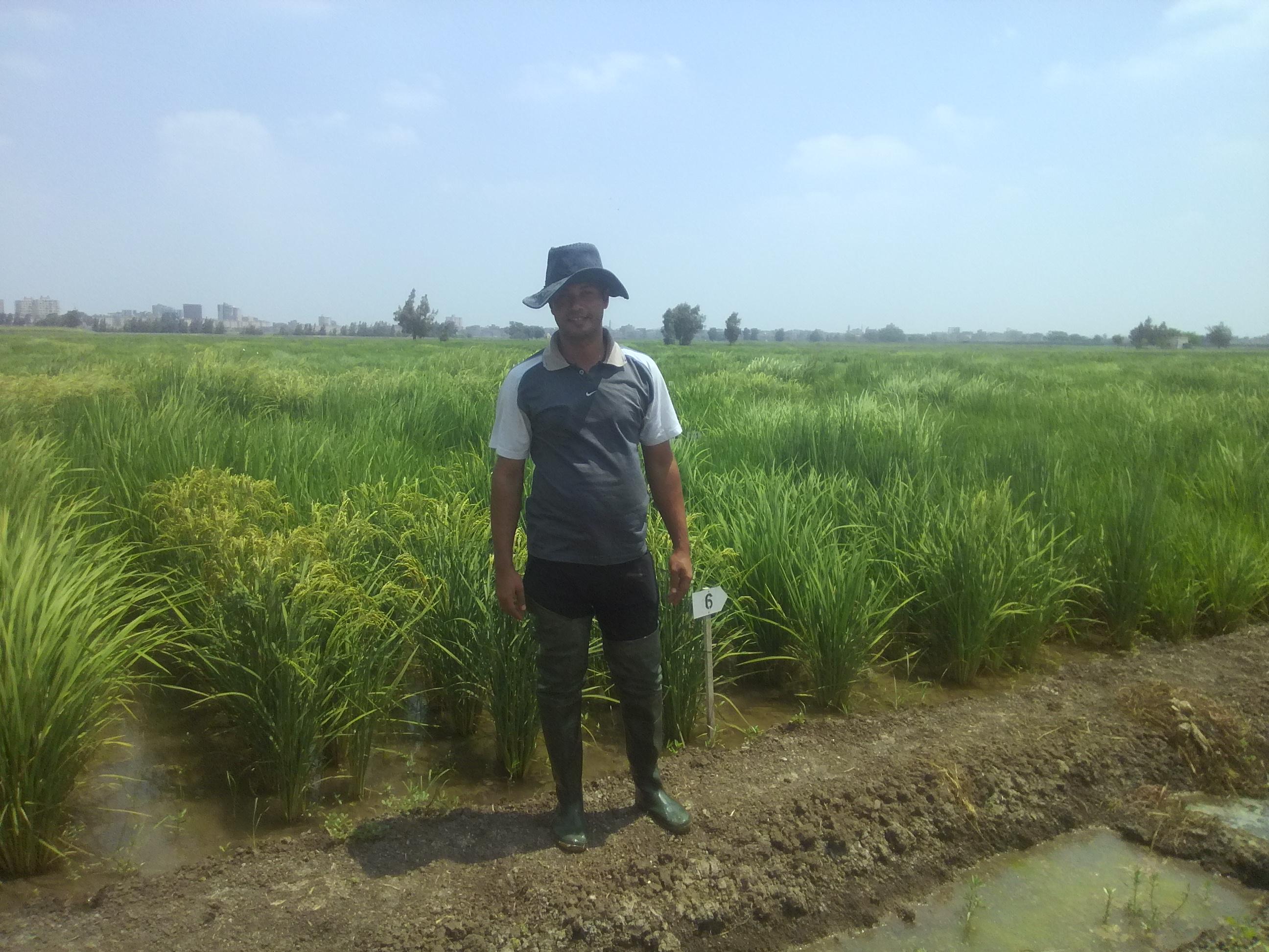 3- حرص المهندسين الزراعيين على متابعة الحقول الاغرشادية