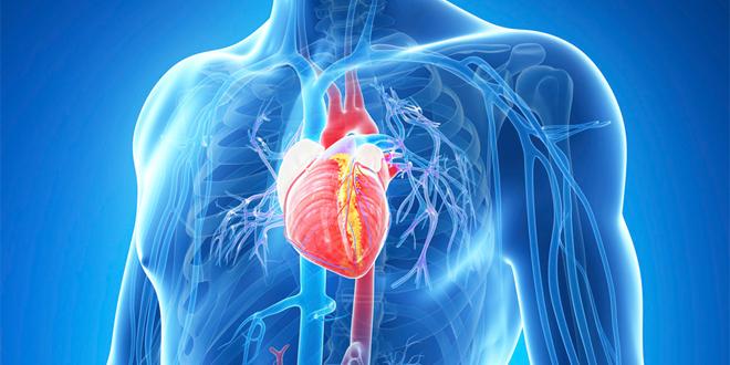اسباب ضربات القلب السريعة 7