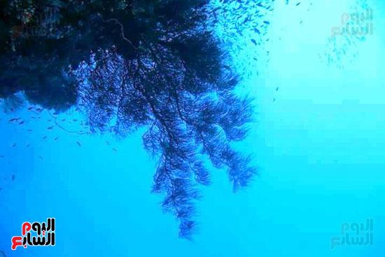 جزيرة سيال بمرسى علم (5)