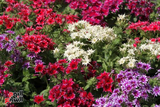 معرض الزهور (27)