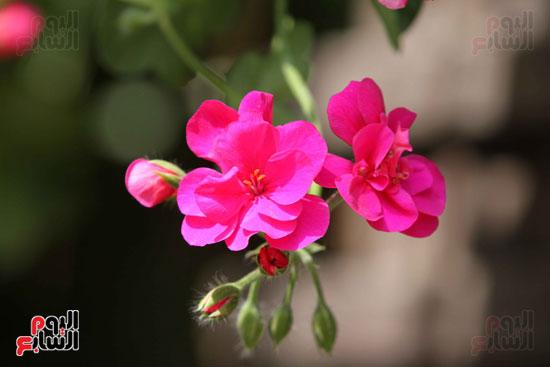 معرض الزهور (20)