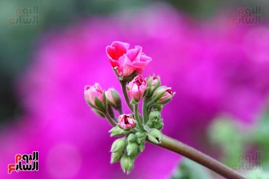 معرض الزهور (7)