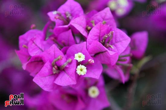 معرض الزهور (25)