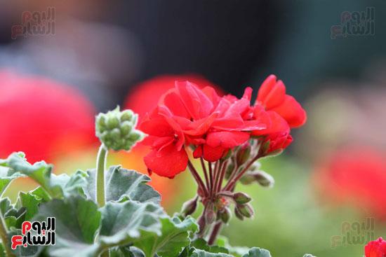معرض الزهور (2)