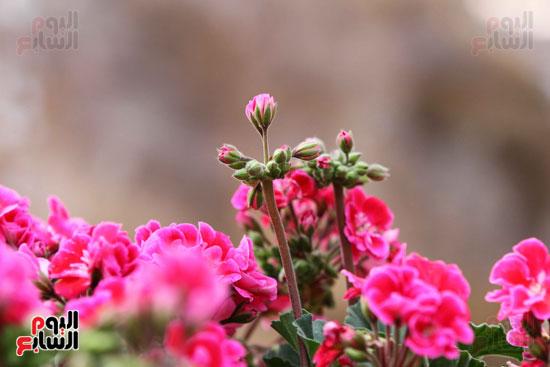 معرض الزهور (16)