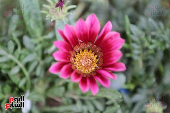 معرض الزهور (12)
