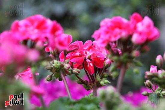 معرض الزهور (9)
