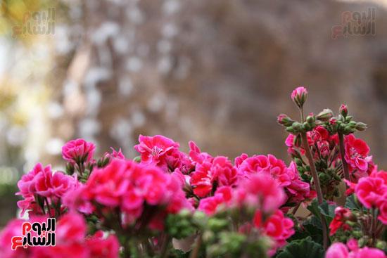 معرض الزهور (15)