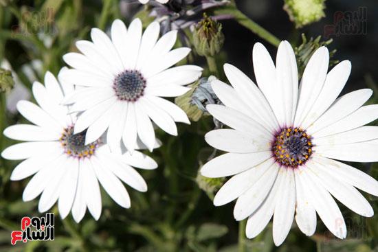 معرض الزهور (22)
