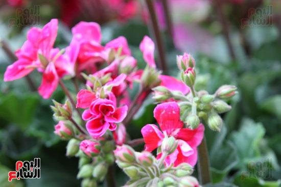 معرض الزهور (5)