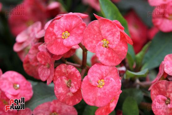 معرض الزهور (24)