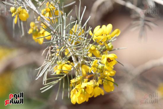 معرض الزهور (11)