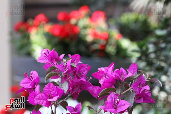 معرض الزهور (6)