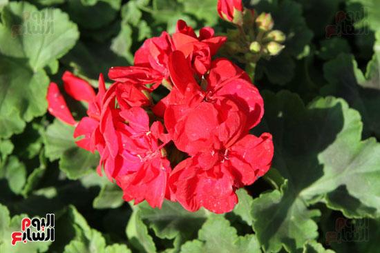 معرض الزهور (14)